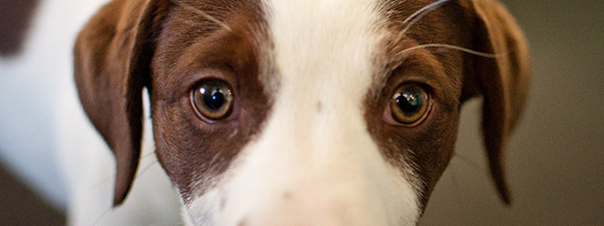 pup-eyes