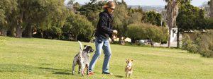 Joan Hunter Mayer Dog Trainer Santa Barbara