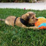 Georgie-with-ball-grass