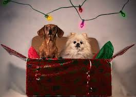 Make Your List (Check It Twice!) To Prepare Your Pooch for Holiday Guests