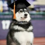 Why You Should Value canine education