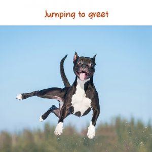 iSpeakDog-Jumping