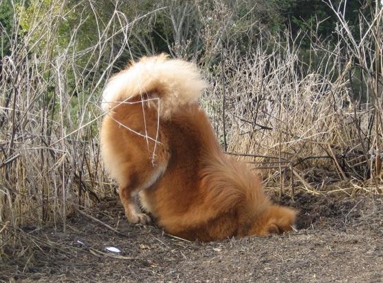 Dogs Enjoy Digging