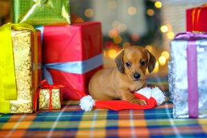 39 Holiday Pet Safety Tips Infographic