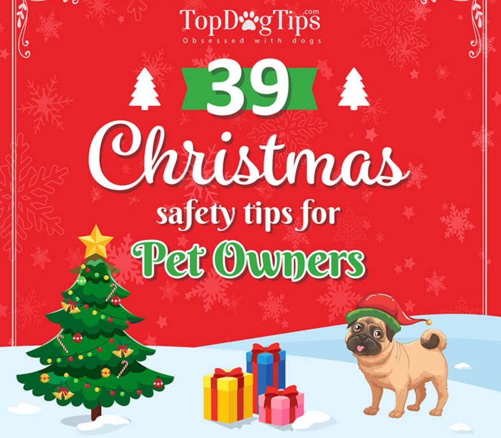 39 Christmas Pet Safety Tips