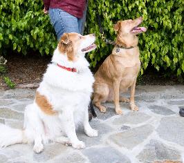 Joan the Dog Coach