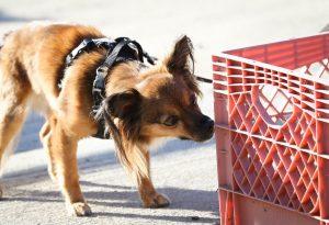 TransPaw Gear Dog Harness