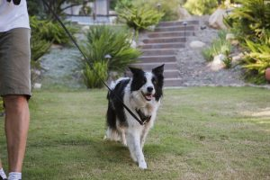 How to find the Right Dog Walker