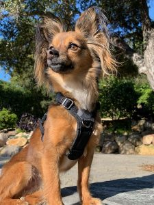 Inquisitive Canine Ringo Starr Hunter Mayer