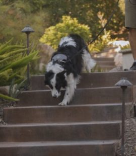 Inquisitive Canine Tips for Outdoor Adventures