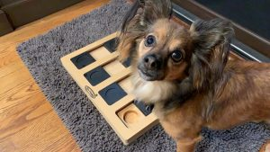 Inquisitive Canine Enrichment Puzzle
