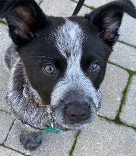 inquisitive-canine-new-puppy