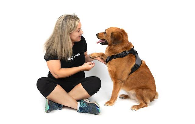 Inquisitive Canine Piper