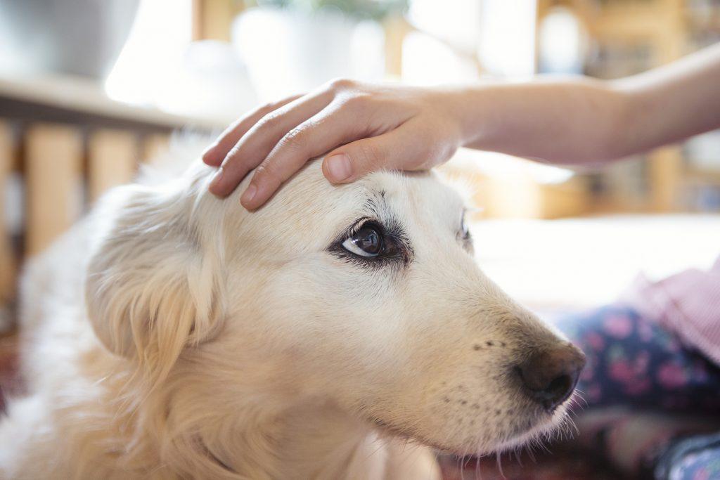 Dog Bite Prevention Week
