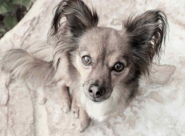 inquisitive canine rescue dog ringo starr