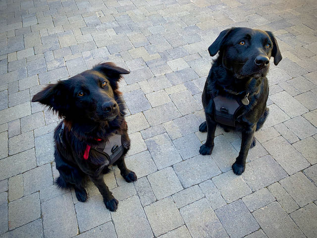 Inquisitive Canine Be Their Best Friend