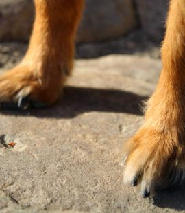 Inquisitive Canine Be Their Voice