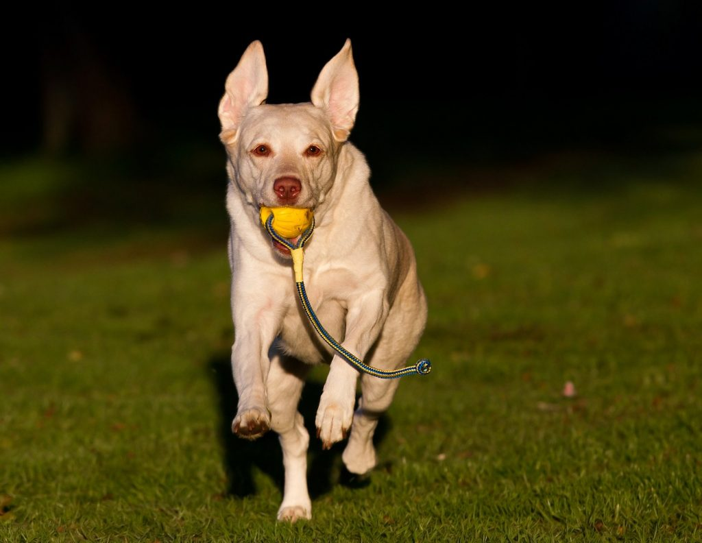 Using Food for Training - Off Leash Play