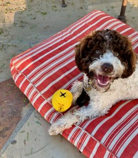 Inquisitive Canine - Summer Training Tips